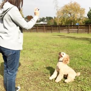 OHANA with dog_いぬのまどぐち